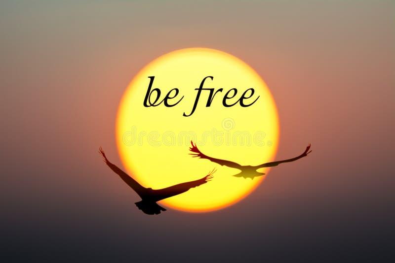 Заход солнца и птицы с быть свободным текстом иллюстрация вектора