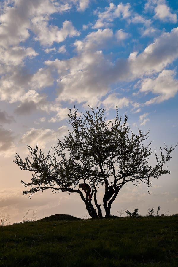 Заход солнца и силуэт мальчика и девушки дерева стоковые изображения rf