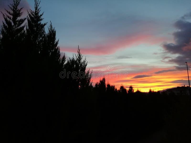 Заход солнца и тени леса стоковое фото