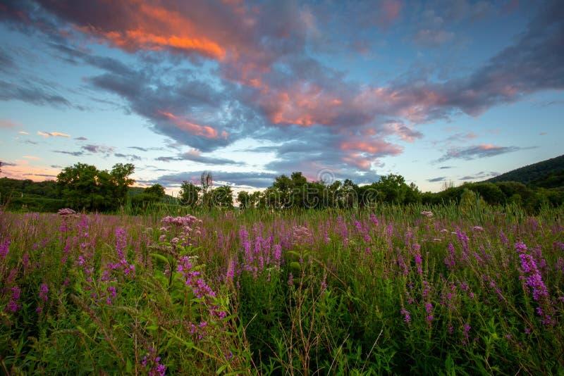 Заход солнца и wildflowers стоковая фотография rf