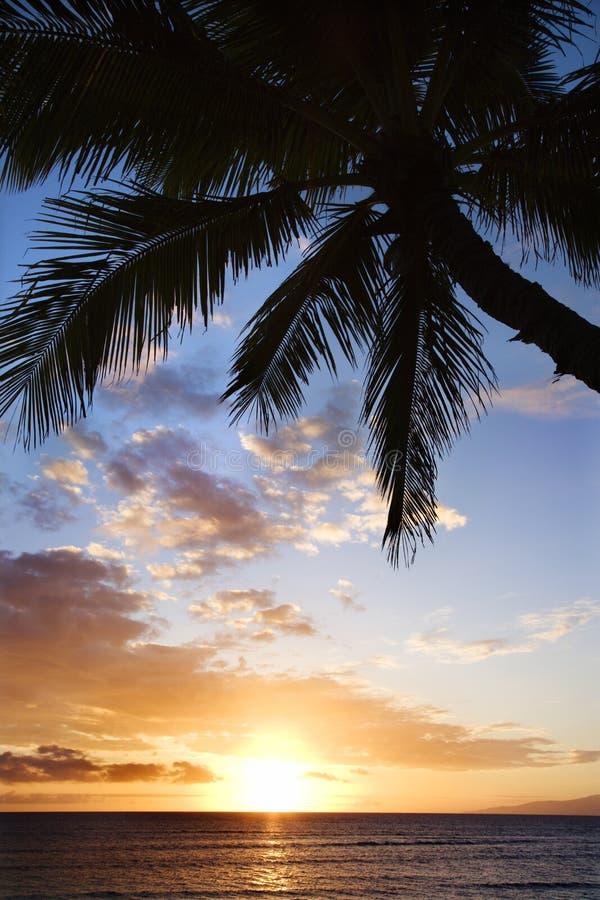 заход солнца ладони океана maui стоковое фото