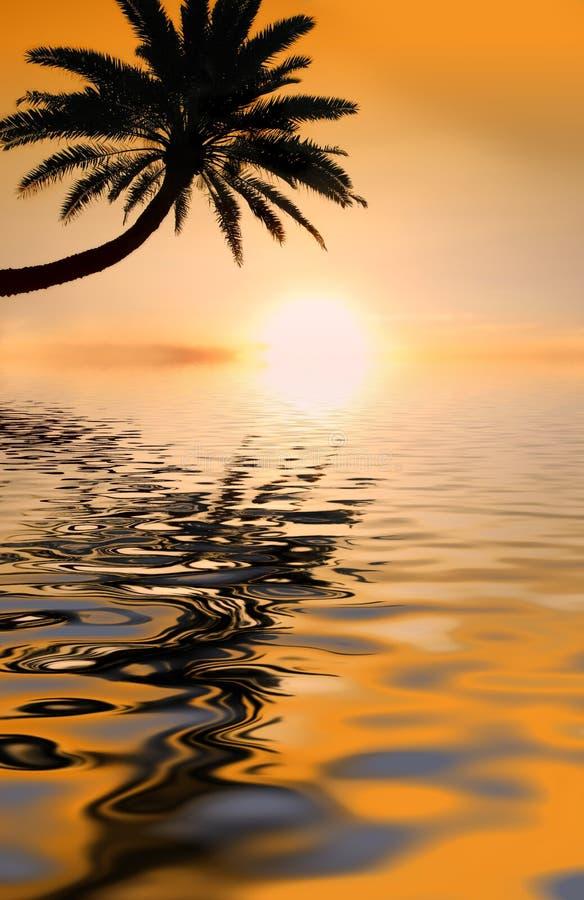 заход солнца ладони стоковое изображение rf