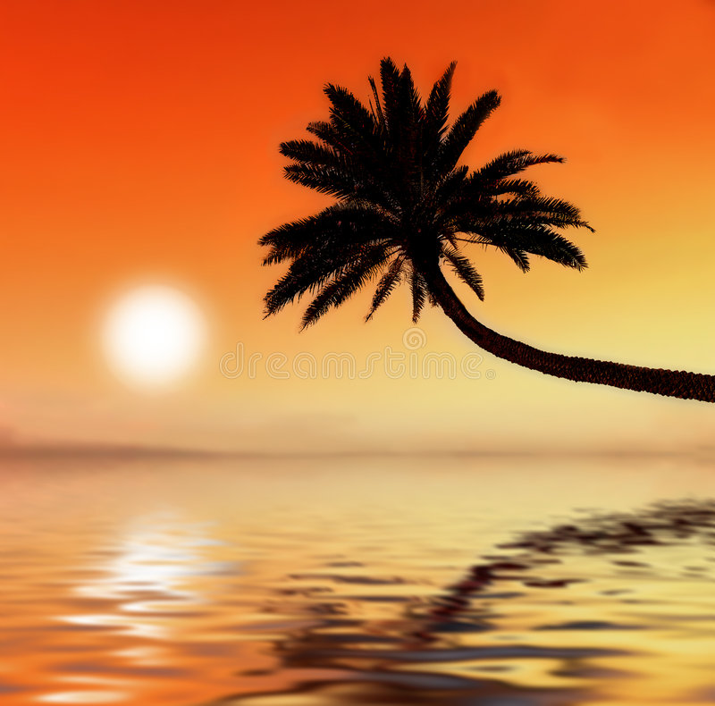 заход солнца ладони стоковое изображение
