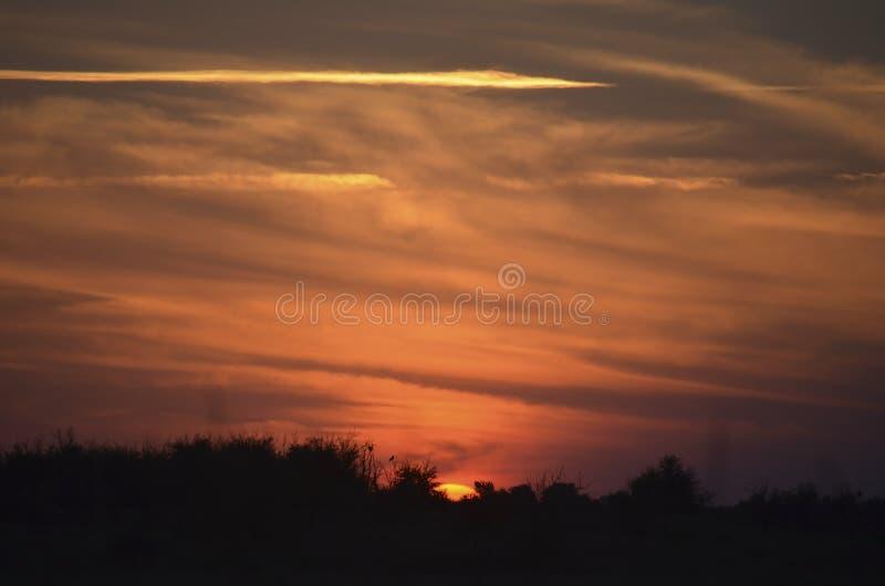 Заход солнца лета над степью Красное небо стоковое изображение rf