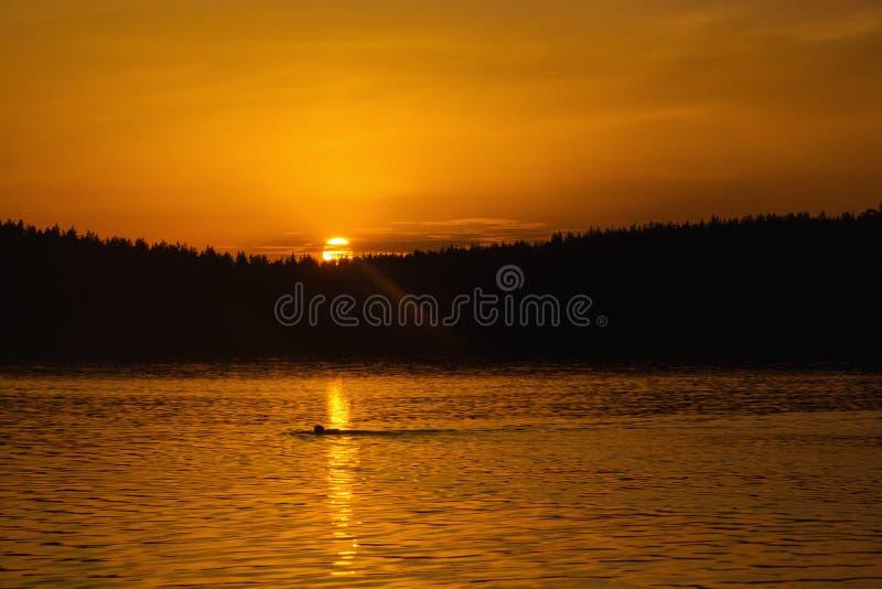 Заход солнца лета на озере стоковое фото rf