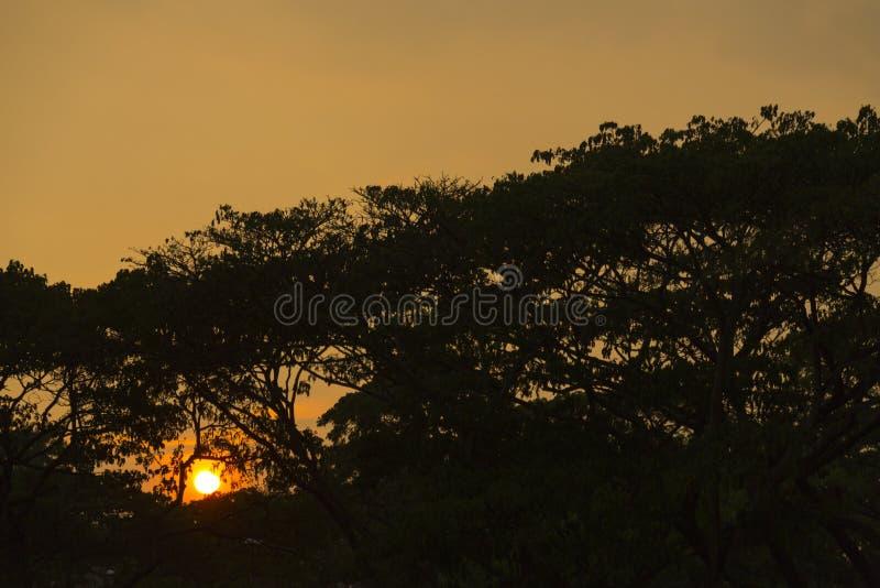 Заход солнца летом стоковое фото