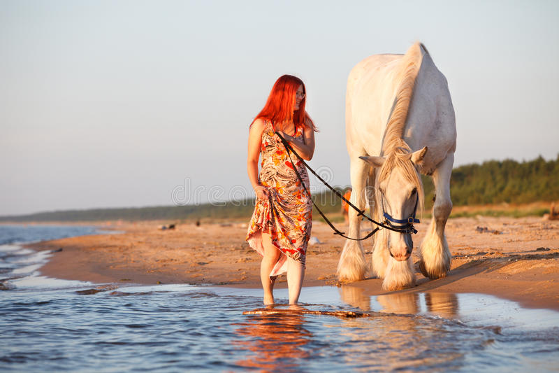 заход солнца лошади пляжа стоковая фотография rf
