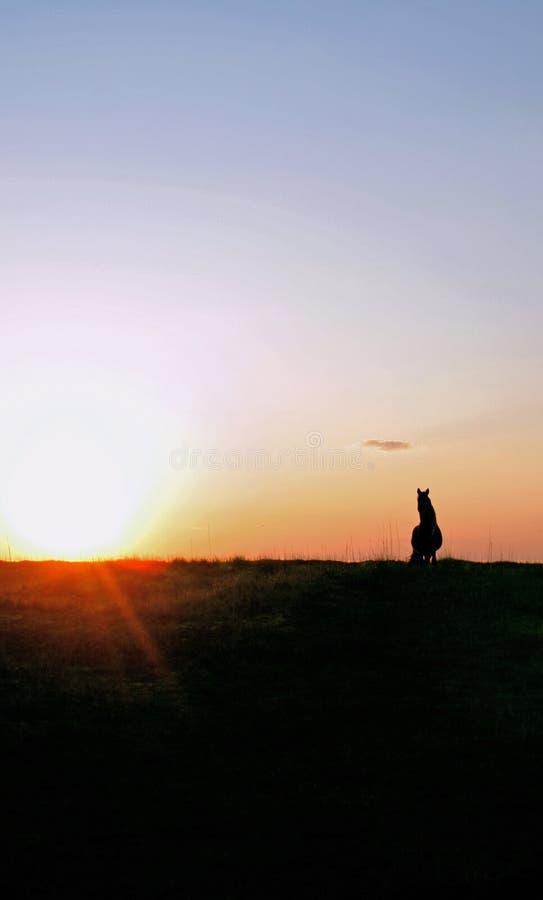 заход солнца лошади холма одичалый стоковая фотография rf