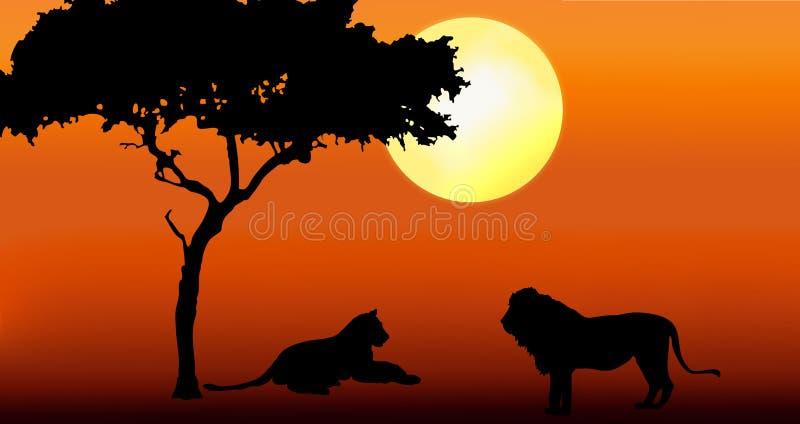 заход солнца львицы льва