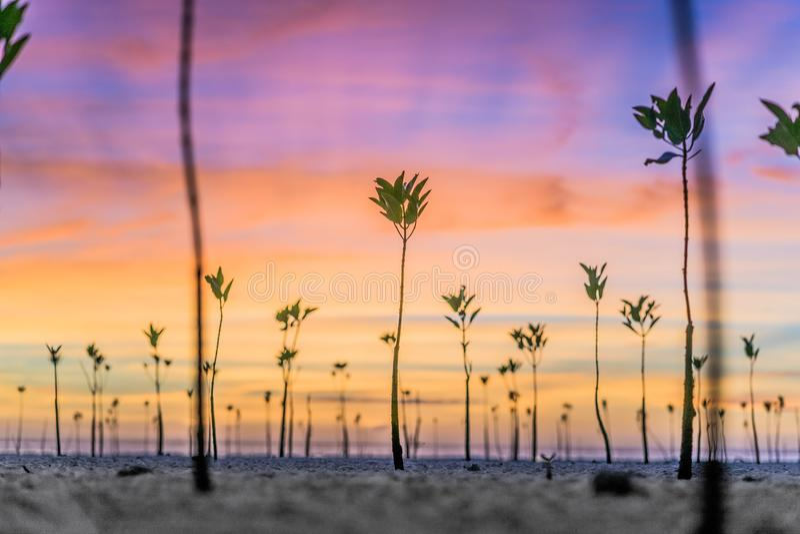 Заход солнца мангров стоковое фото rf