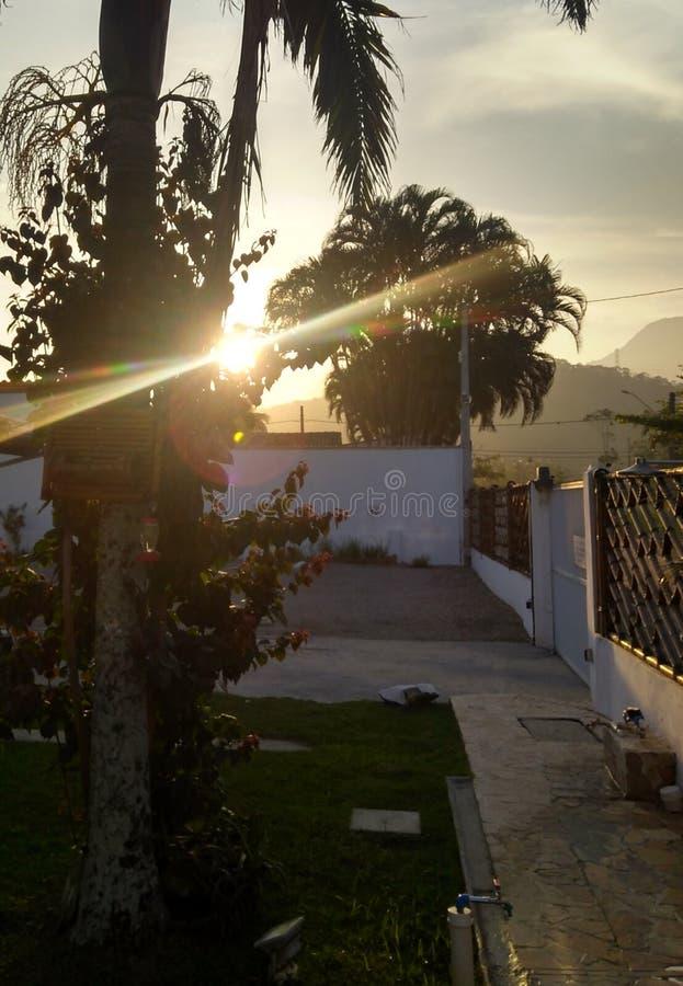 Заход солнца между деревьями стоковое изображение rf