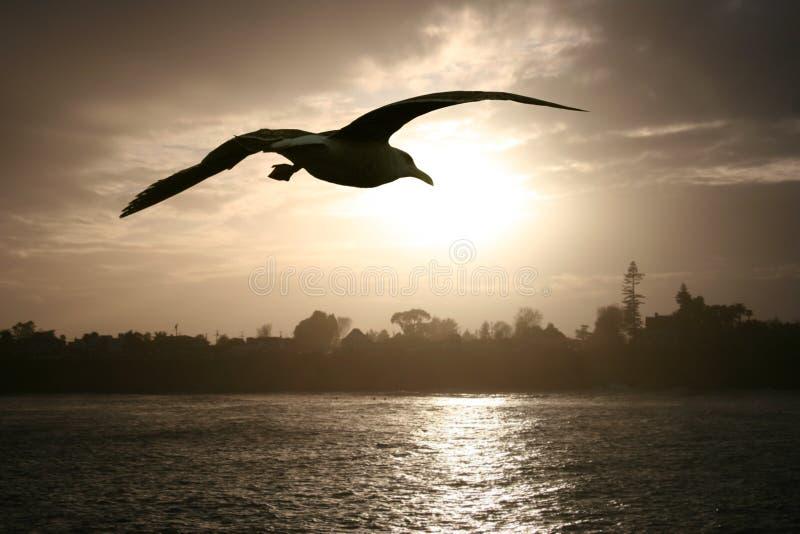 заход солнца моря чайки стоковые фотографии rf