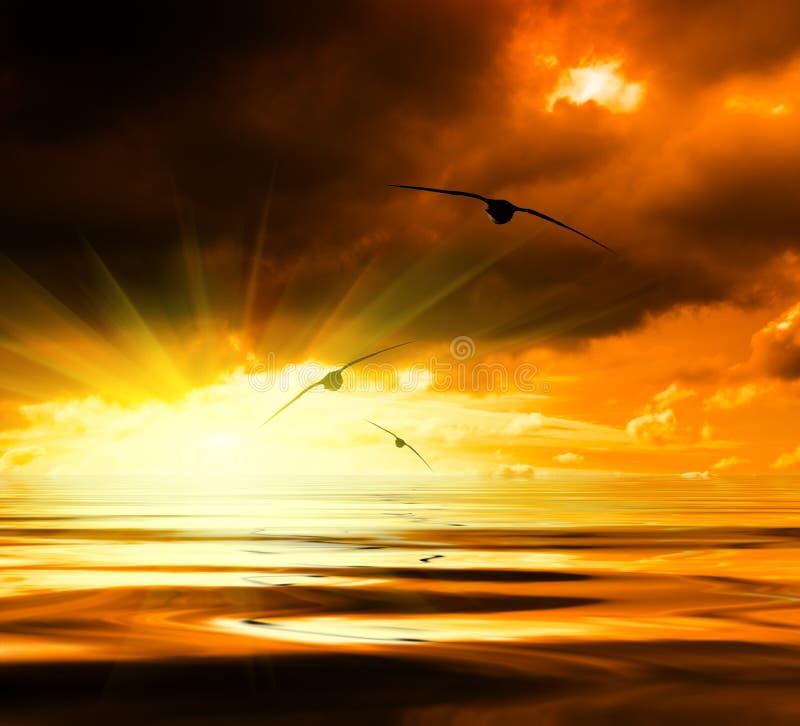 Download заход солнца моря стоковое фото. изображение насчитывающей чисто - 6868900