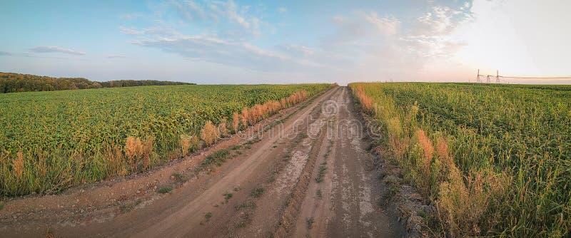 заход солнца над грязной улицей на пшеничном поле стоковое изображение