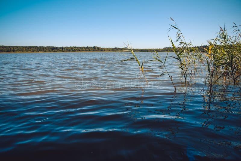 Заход солнца над озером леса Взгляд низкого угла от шлюпки с планами на foregound стоковое фото rf