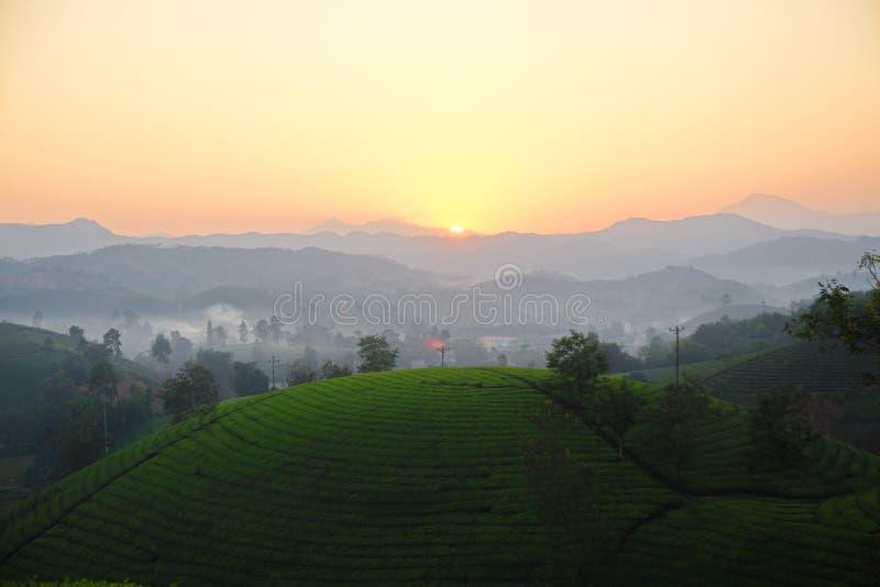 Заход солнца над плантациями чая стоковые фотографии rf