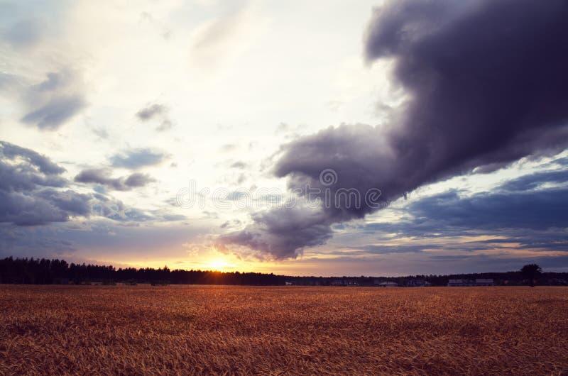 Заход солнца над полем рож стоковые изображения