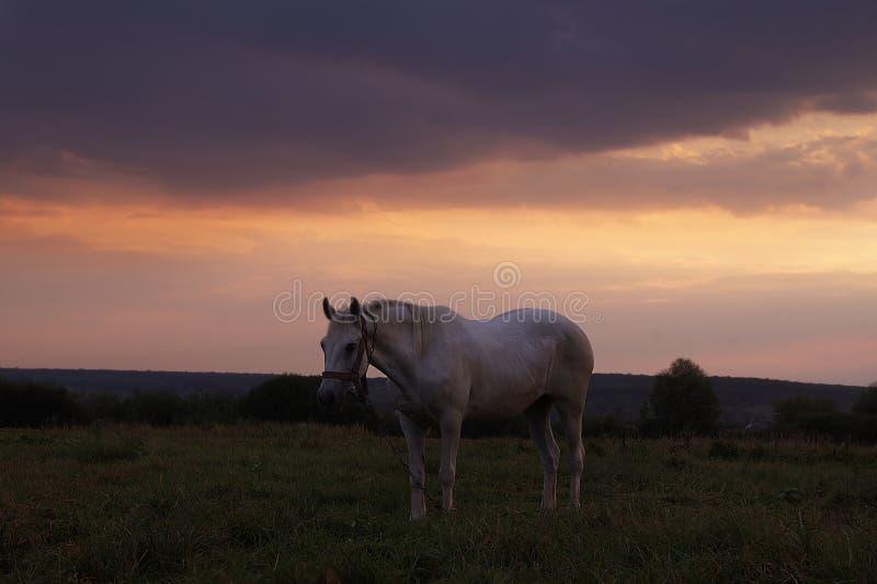 Заход солнца над полем цветка стоковая фотография rf
