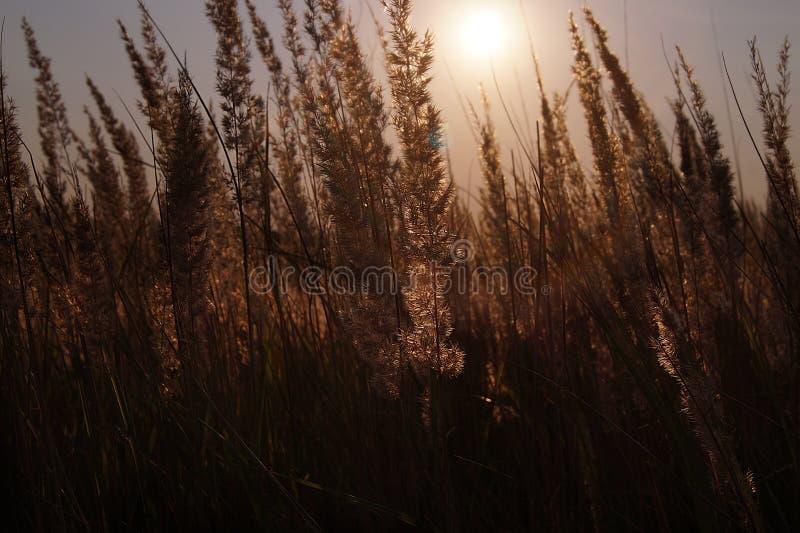 Заход солнца над полем цветка стоковые фото