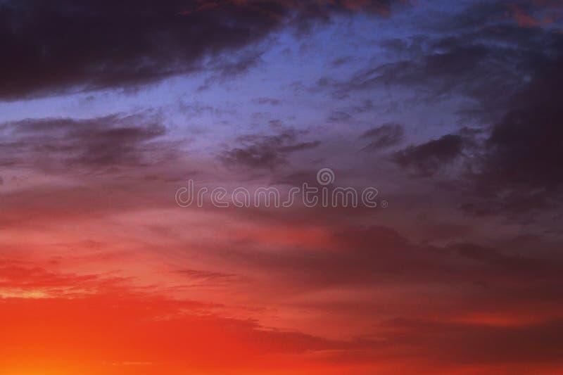 Заход солнца над полем цветка стоковые фотографии rf