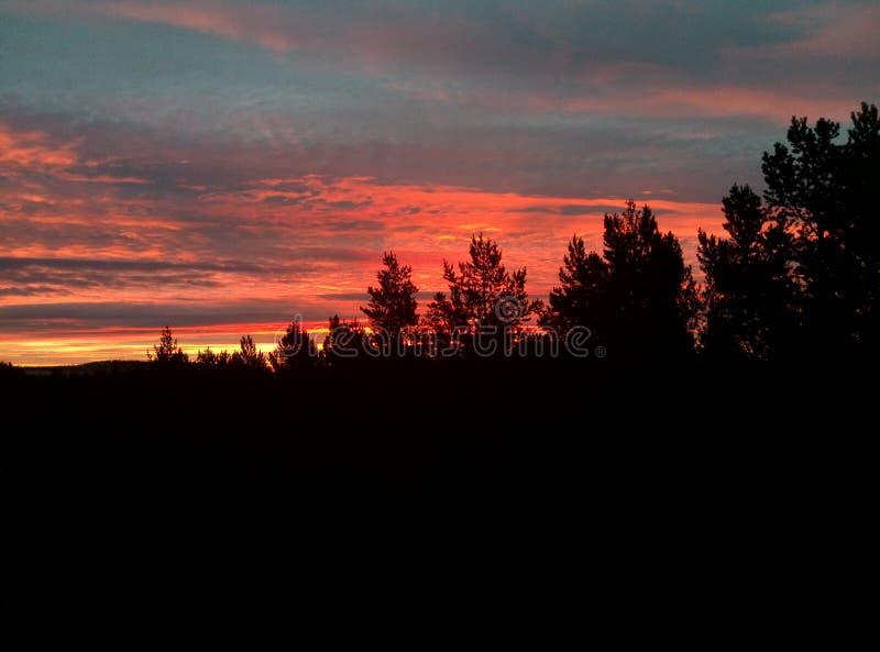 Заход солнца над темным лесом стоковые изображения rf
