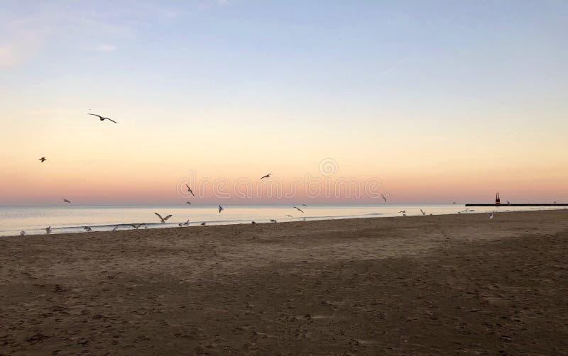 Заход солнца над Lake Michigan с чайками и маяком стоковое фото