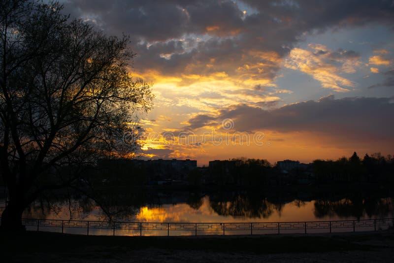 Заход солнца на береге реки с деревом стоковая фотография rf