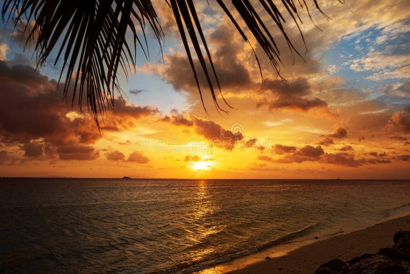 Заход солнца на море с тропическими пальмами стоковое изображение