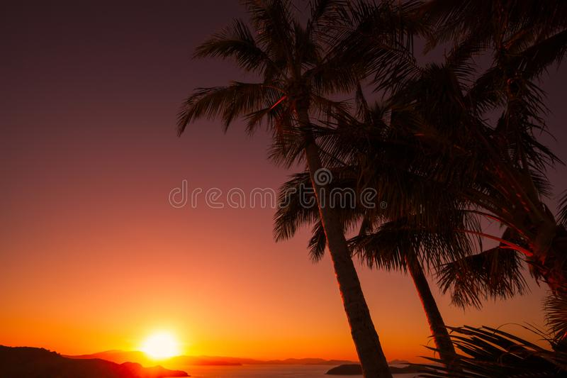 Заход солнца на одном холме дерева, острове Гамильтона australites стоковое изображение