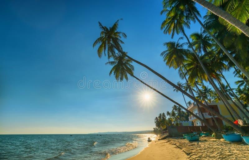 Заход солнца на пляже с опрокинутыми кокосовыми пальмами, стоковая фотография