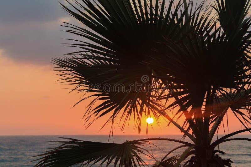 Заход солнца на пляже с пальмой стоковые фотографии rf