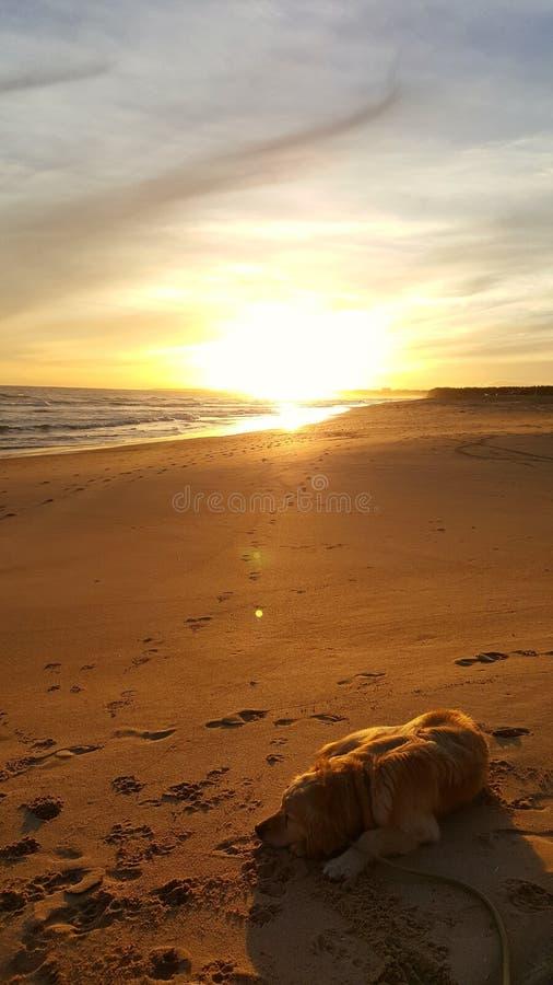 Заход солнца на пляже с собакой спать стоковая фотография rf