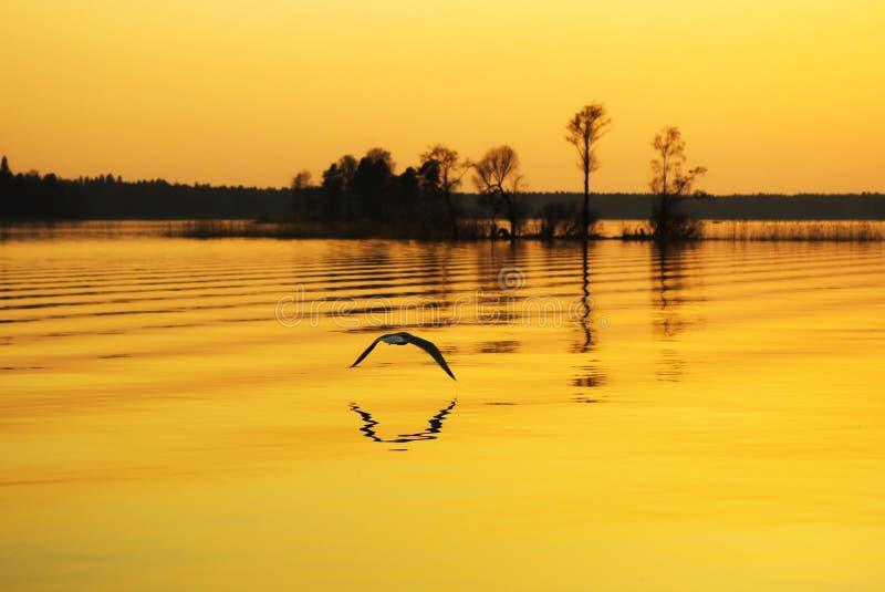 заход солнца озера вниз стоковые изображения rf