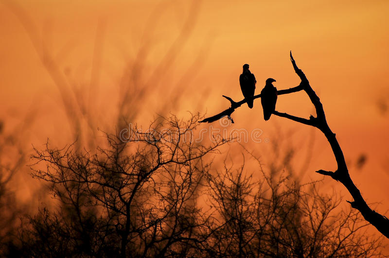 заход солнца орлов стоковое фото