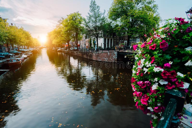 Заход солнца осени на улицах и каналах Амстердама Цветки Befutiful во фронте стоковые изображения rf