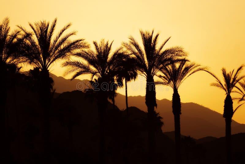 заход солнца Палм Спринг стоковая фотография rf