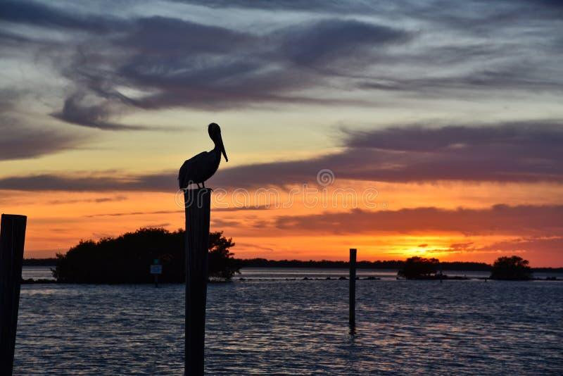 Заход солнца пеликана во Флориде стоковое изображение rf