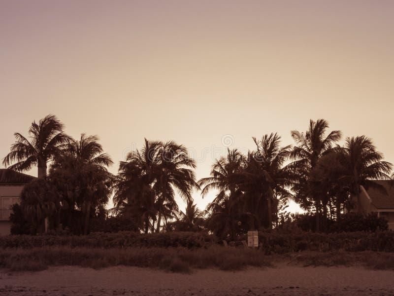 Заход солнца пляжа на острове Palm Beach стоковые изображения rf