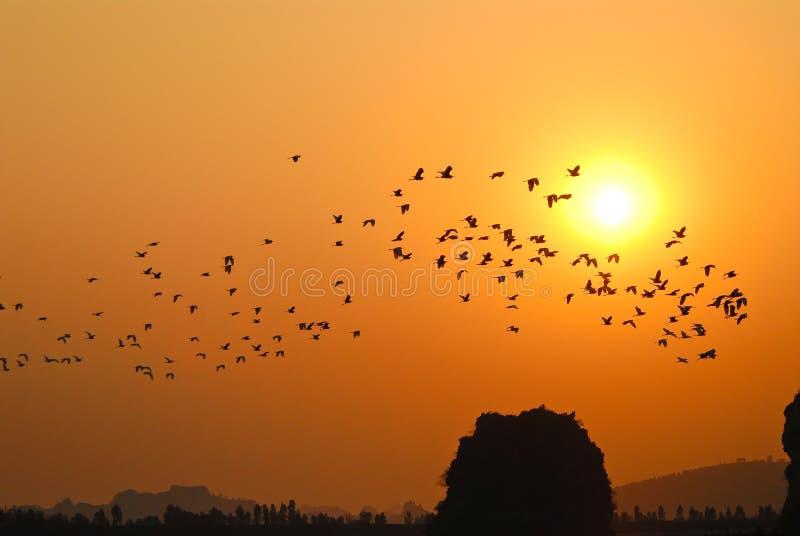 заход солнца птиц стоковые изображения rf