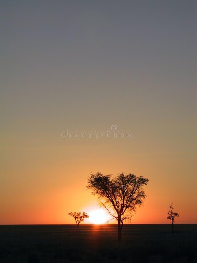 заход солнца саванны стоковая фотография