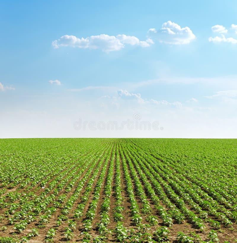 заход солнца с облаками над аграрным зеленым полем с солнцецветами стоковое изображение