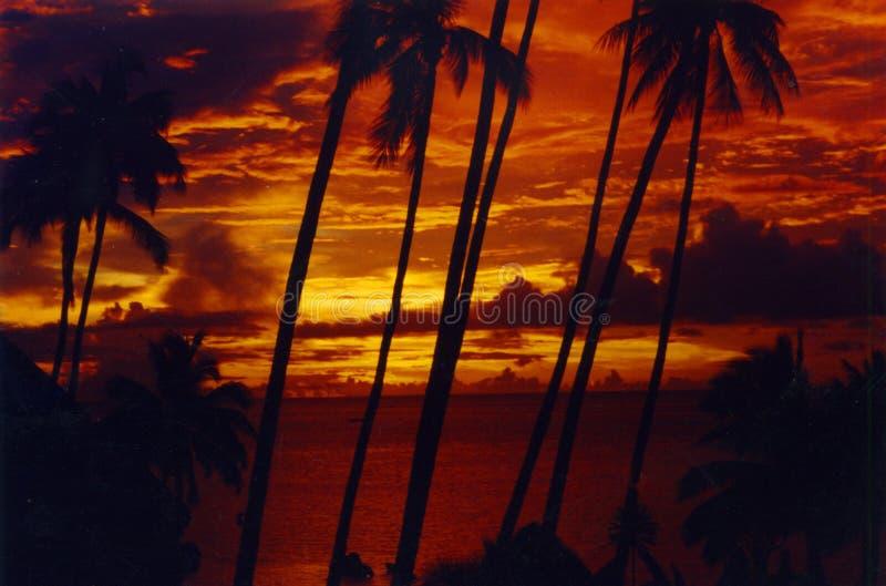 заход солнца Таити palmtree стоковая фотография