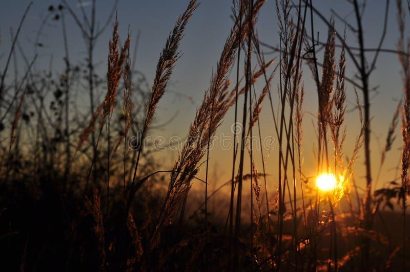 заход солнца травы стоковая фотография rf