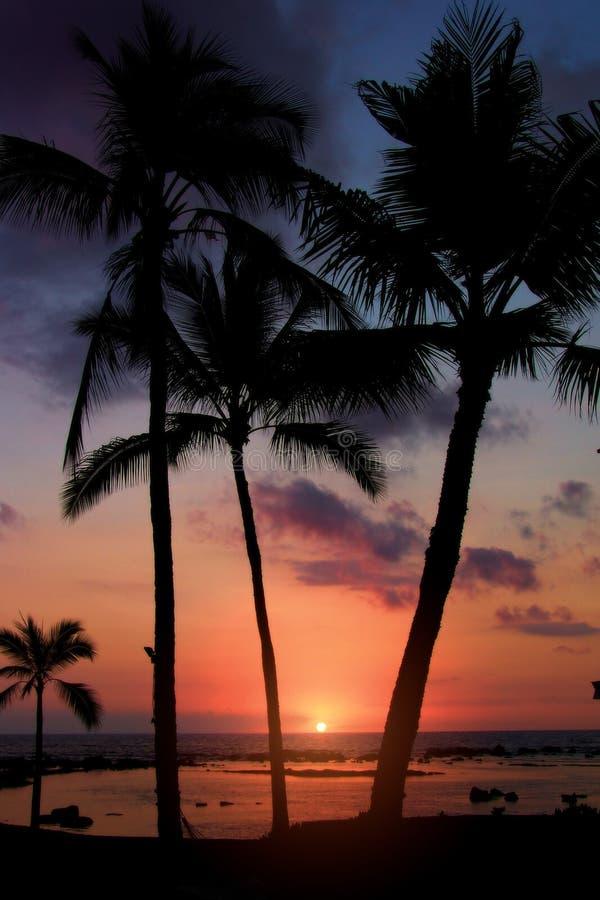 заход солнца тропический стоковое изображение