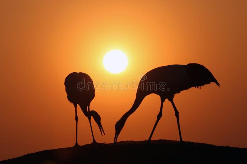 заход солнца увенчанный краном красный стоковые фотографии rf