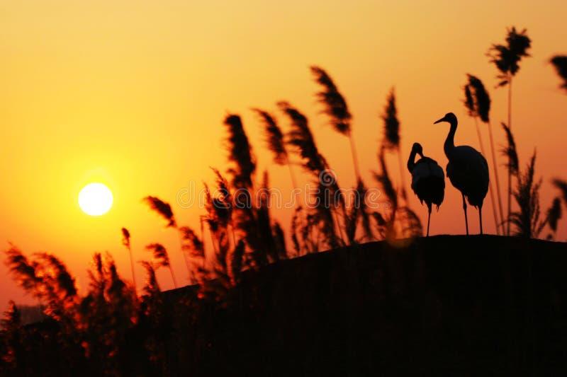 заход солнца увенчанный краном красный стоковое изображение