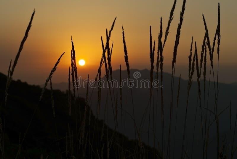 Заход солнца увиденный через траву стоковые фото
