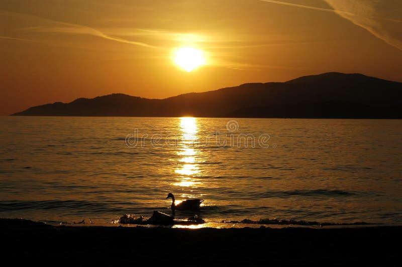 заход солнца утки стоковая фотография
