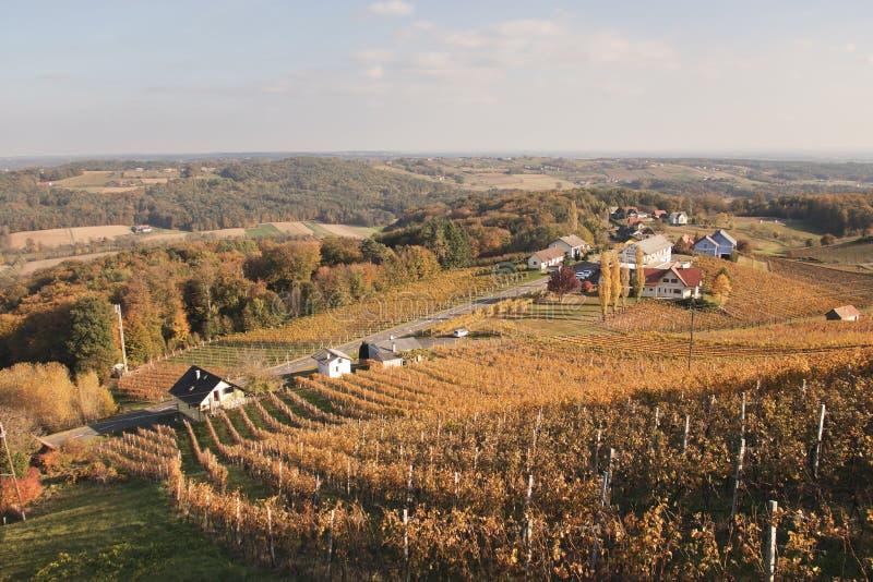 Заход солнца холмов виноградника стоковое изображение rf