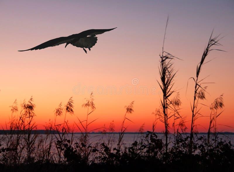 заход солнца чайки стоковое изображение